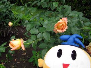 kittan syaeburesu  blog