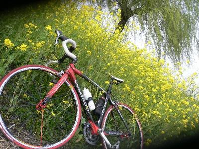菜の花とコルナゴ
