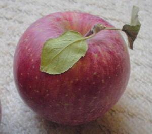 りんご ふじ