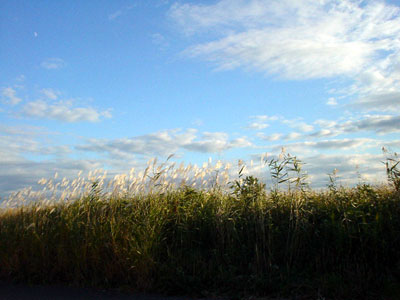 すすきの野原