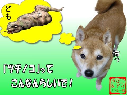 Xきま姐&ツチノコ