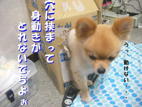 SA080816a_convert_20080817223830_20081113131107.jpg