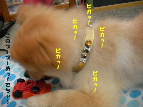 SA080911a_convert_20080912130857.jpg