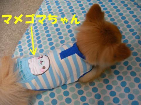 SA081027d_convert_20081029014928.jpg