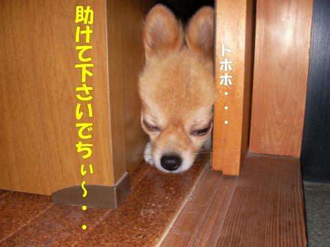 SA081109bb_convert_20081113142742.jpg