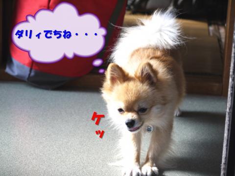 SA081115ax_convert_20081121144829.jpg