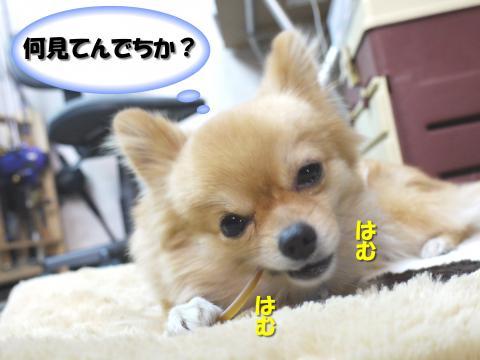 SA081204aa_convert_20081207165048.jpg