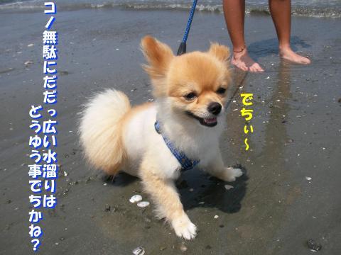 SA090919d_convert_20080825160917.jpg