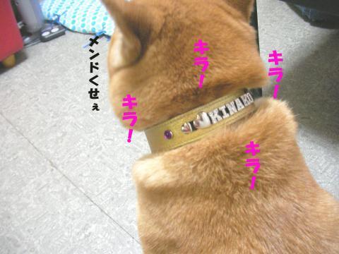 SK080911a_convert_20080912130748.jpg