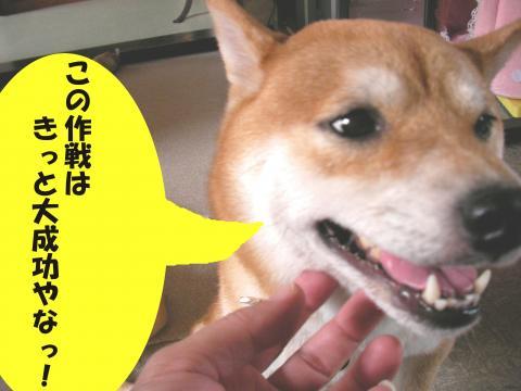 SK081003a_convert_20081009003834.jpg