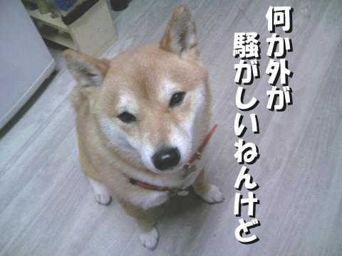 SK081008a_convert_20081010153514.jpg