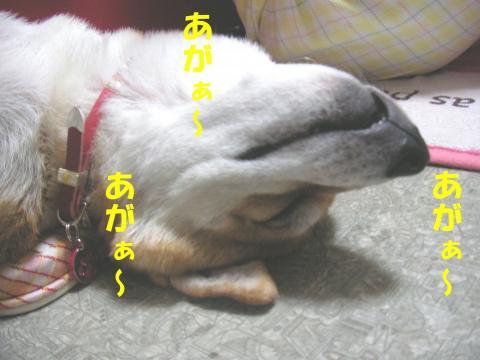 SK081105a_convert_20081107145709.jpg