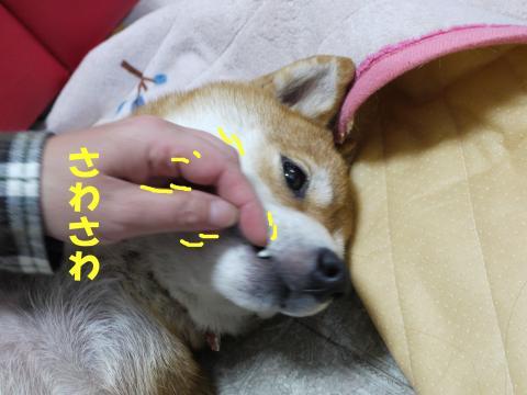 SK081108cc_convert_20081112104852.jpg