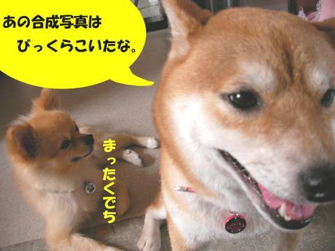 SW081003a_convert_20081007144342.jpg