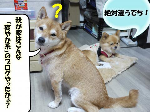 SW081129a_convert_20081129191323.jpg