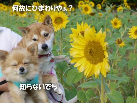SW081201n_convert_20081202171157.jpg