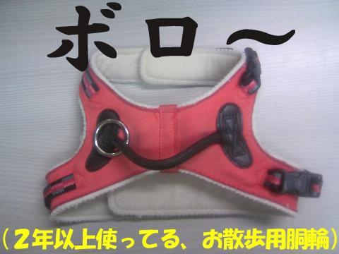 Sdouwa-a_convert_20081028233236.jpg