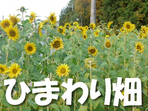 Shimawari-b_convert_20081202162409.jpg
