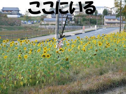 Shimawari-c_convert_20081202164150.jpg