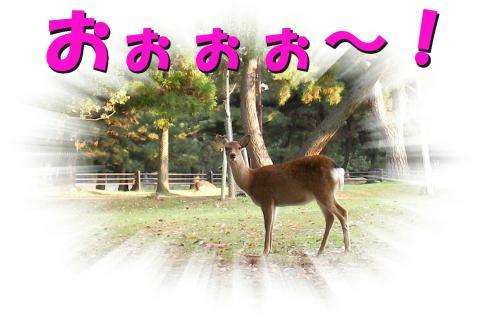 Sshika-bb_convert_20081022182639.jpg