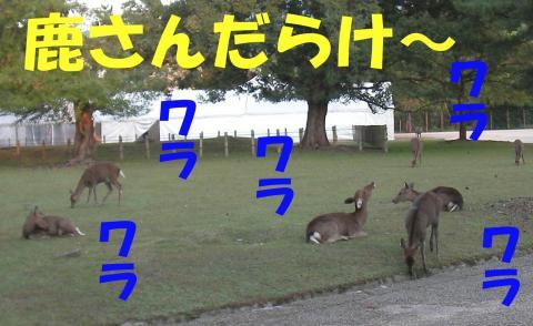 Sshika-f_convert_20081022182239.jpg