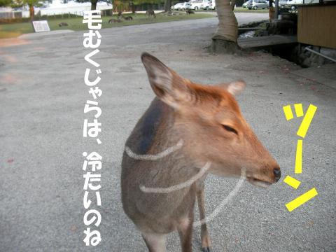 Sshika-i_convert_20081023130137.jpg
