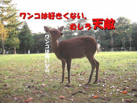 Sshika-j_convert_20081022215118.jpg