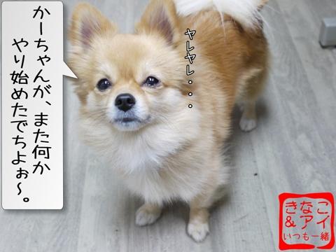 XSA081209Aa_20090125135932.jpg