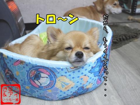 XSA090108Cf.jpg