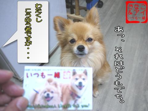 XSA090212a_20090212143219.jpg