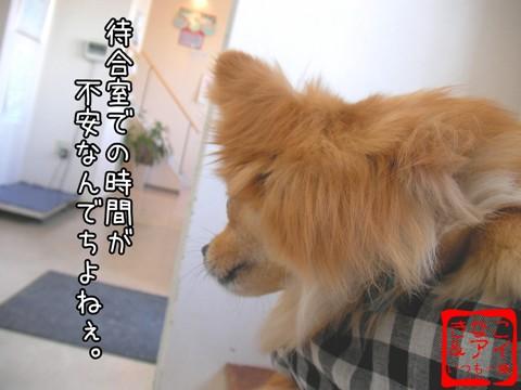 XSA090330a.jpg