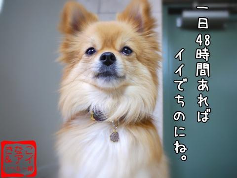 XSA090401Ae.jpg