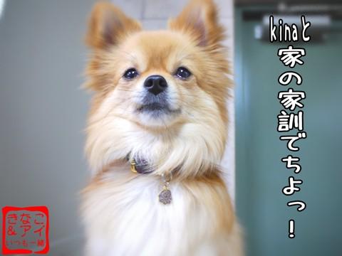 XSA090401Af.jpg