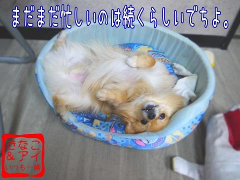 XSA090504Ba.jpg
