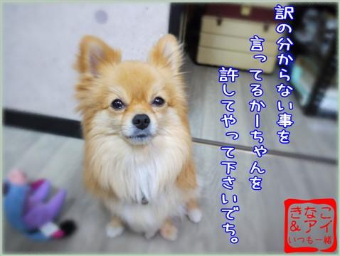 XSA090509c.jpg