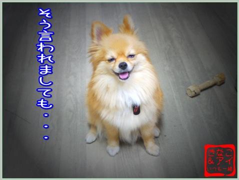 XSA090711b.jpg