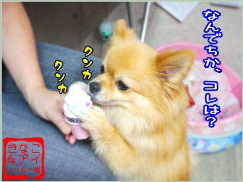 XSA090721c.jpg