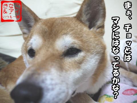 XSK081109ak.jpg