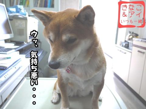 XSK090204B.jpg