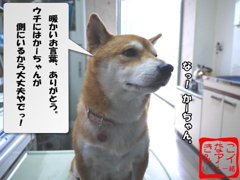 XSK090204Bb.jpg