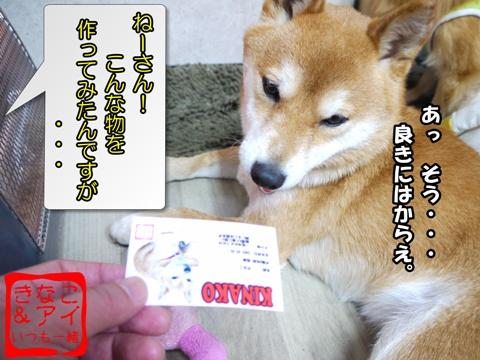 XSK090212a.jpg