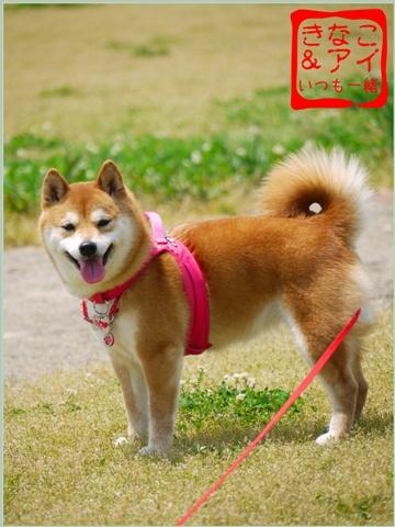 XSK090511Bg.jpg