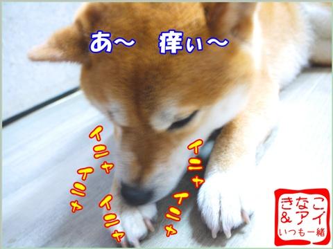 XSK090720Ac.jpg