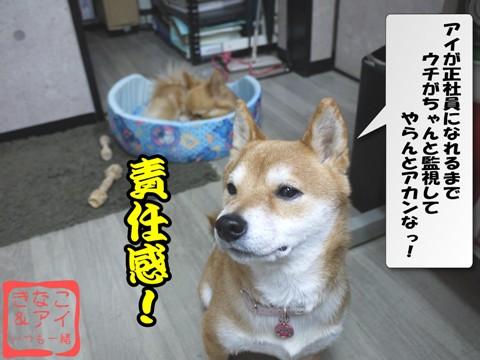 XSW090121Ac.jpg