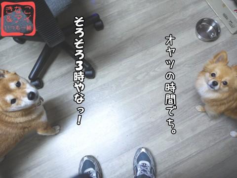 XSW090128A.jpg