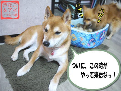 XSW090128Aa.jpg