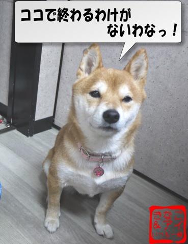 XSWK090121A.jpg