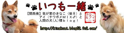 Xn-topD.jpg
