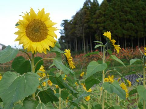 himawari-d_convert_20081202171623.jpg