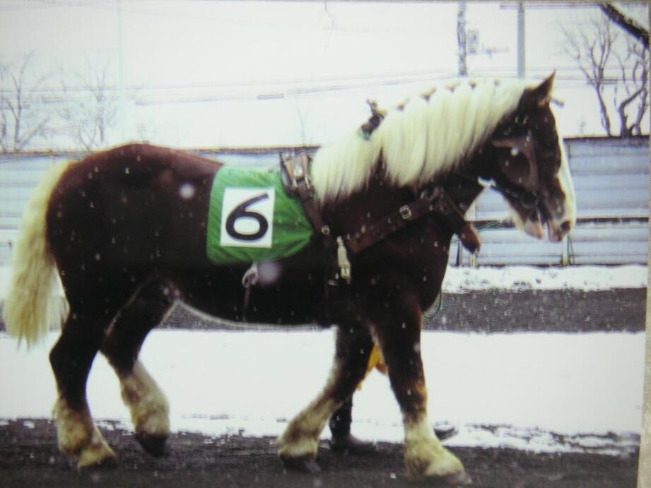 パドックのばん馬